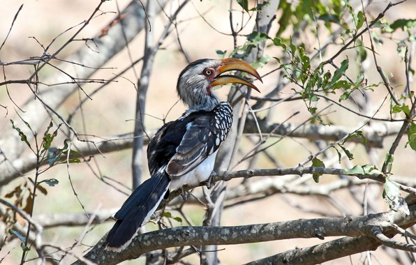 Picture leaves, the sun, trees, branches, nature, bird, feathers, beak, bokeh, Hornbill, Southern Yellow-billed Hornbill, Tockus …