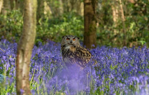 Picture forest, look, trees, flowers, nature, owl, bird, trunks, glade, spring, blue, bells, lilac, owl