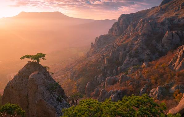 Picture trees, landscape, sunset, mountains, nature, rocks, pine, Svetlov Sergey