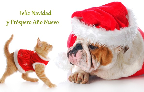 Picture new year, dog, kitty