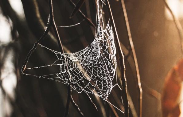 Picture spider, macro, web