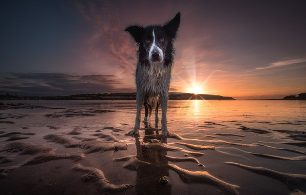 Picture sand, beach, the sky, look, face, water, the sun, sunset, nature, shore, dog, wet, the …