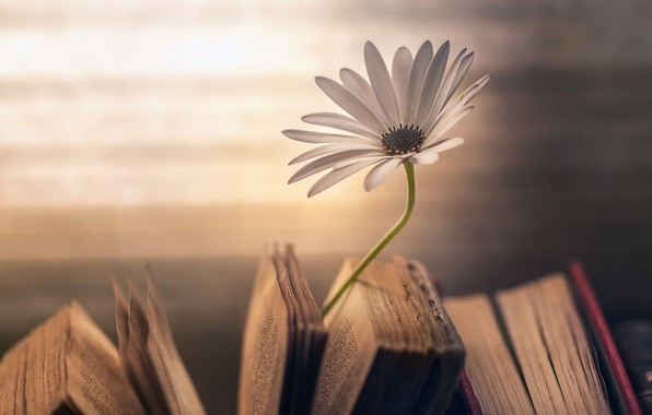 Picture flower, background, books