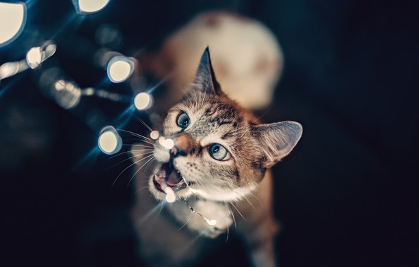Picture lights, wallpaper, animals, cat, glare, blur, bokeh, cats, pets, trouble, 4k ultra hd background