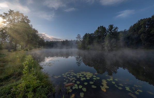 Picture rays, trees, landscape, nature, fog, pond, morning, grass, forest, Bank, Andrei