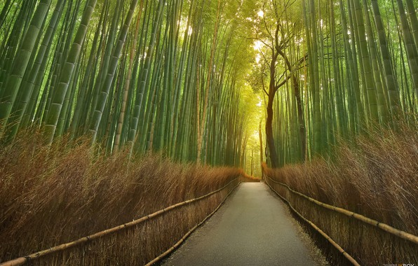 Picture road, bamboo, pass