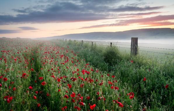 Picture field, summer, fog, Maki