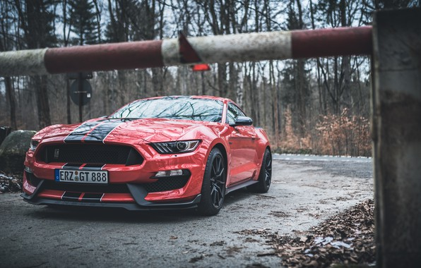Picture Mustang, Ford, Shelby, Ford Mustang, GT350, Ford Mustang Shelby GT350, Shelby GT350