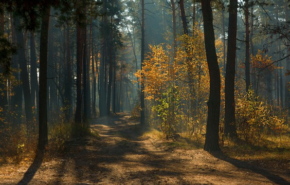Picture road, autumn, forest, rays, light, trees, branches, fog, foliage, track, shadows, haze, pine, alley, path, ...