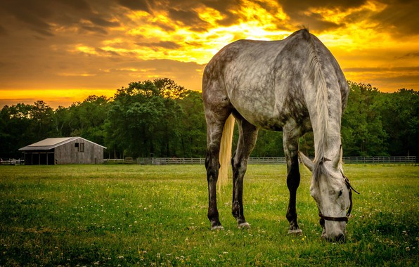 Picture sunset, horse, the evening, meadow