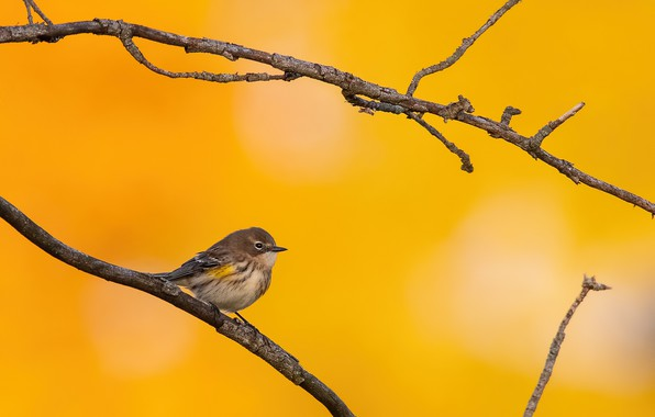 Picture autumn, nature, bird, branch
