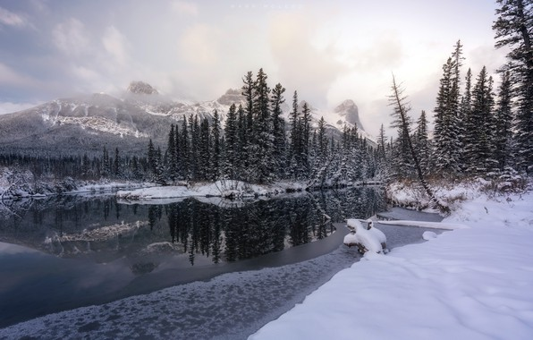 Picture winter, forest, river
