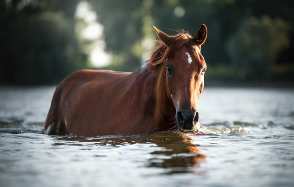 Picture water, horse, horse