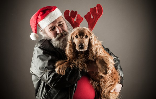 Picture background, mood, holiday, hat, dog, jacket, Christmas, New year, horns, black, beard, Santa Claus, red, …