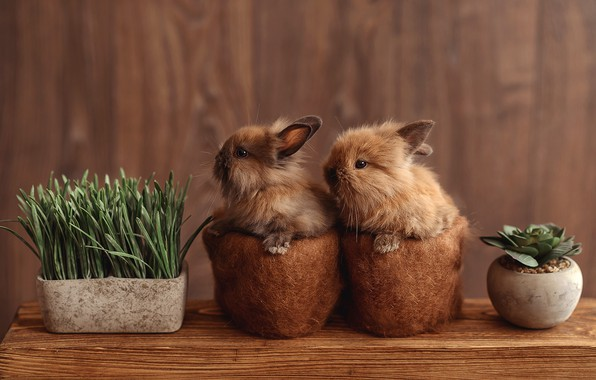 Picture table, plants, rabbit, pair, rabbits, kids, a couple, brown, pots, two, rabbit, cute, rabbits, two …