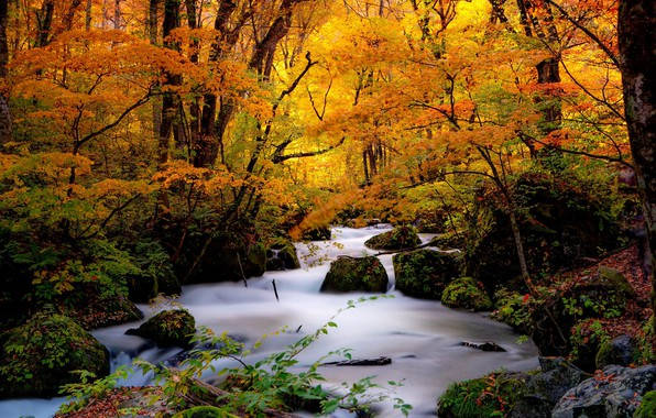 Picture autumn, forest, trees, stream, stones, Japan, Japan, river, Oirase Stream, Ashura no Nagare