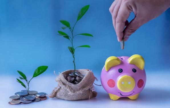 Picture money, piggy, coin