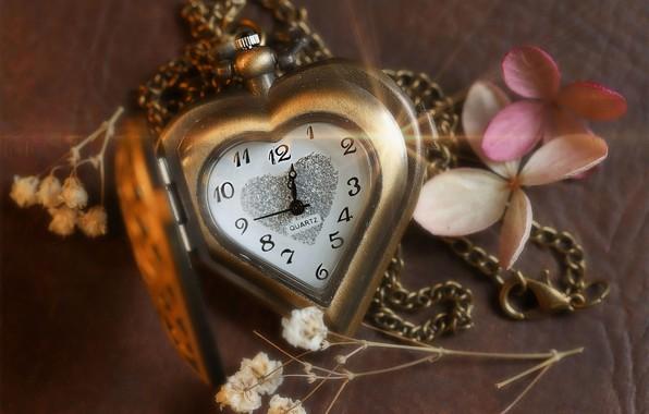Picture macro, style, heart, watch, dial, chain, gypsophila, цветки гортензии