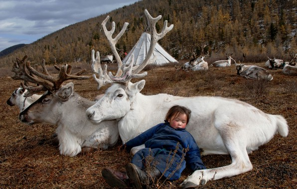 Picture nature, life, girl, deer, Mongolia