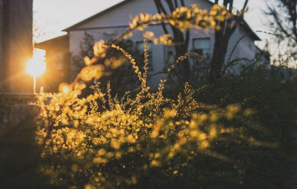 Picture House, Grass, Sun, Sunset, Summer, Mood