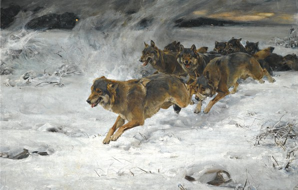 Picture dogs, snow, dawn, pack, artist, Alfred Kowalski-Verush