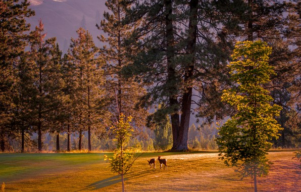 Picture autumn, forest, light, trees, Park, glade, deer, ate, pine, kids, deer, fawn, a couple, two, ...