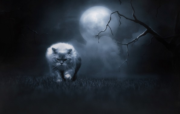 Picture cat, grass, cat, look, night, branches, nature, pose, fog, darkness, fear, fantasy, tree, darkness, the ...