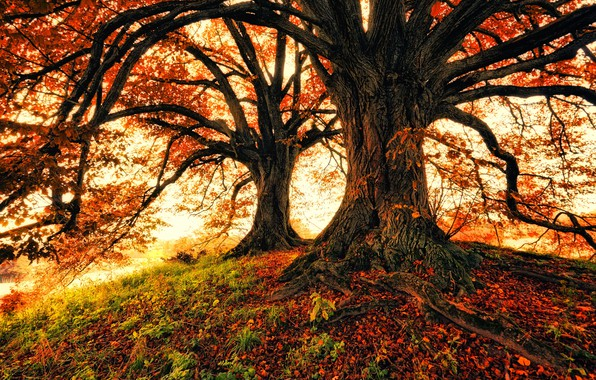 Picture autumn, trees, nature, foliage