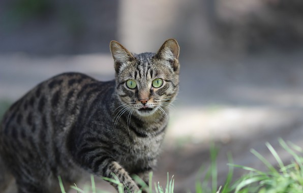 Picture language, cat, look, background
