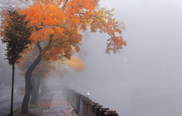 Picture seagulls, Neva embankment, St. Petersburg, in the fog, autumn trees