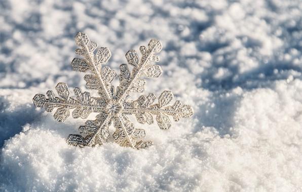 Picture winter, snow, white, christmas, snowflake, winter, snow, snowflake