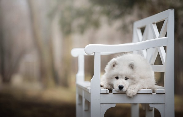 Picture sadness, white, look, leaves, bench, nature, pose, Park, background, dog, paws, baby, shop, puppy, lies, …