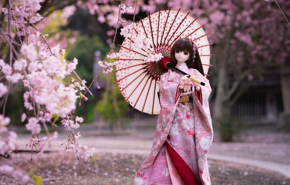Picture umbrella, Japanese, doll, Sakura, kimono