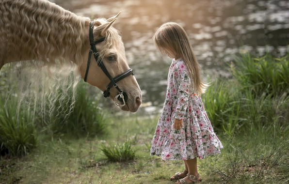 Picture summer, horse, girl