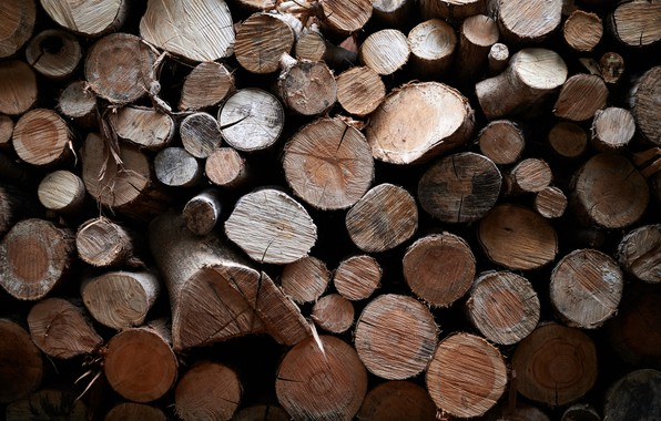 Picture background, tree, logs