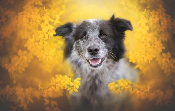 Picture language, look, face, flowers, branches, portrait, dog, blur, spring, yellow, garden, grey, flowers, flowering, yellow ...