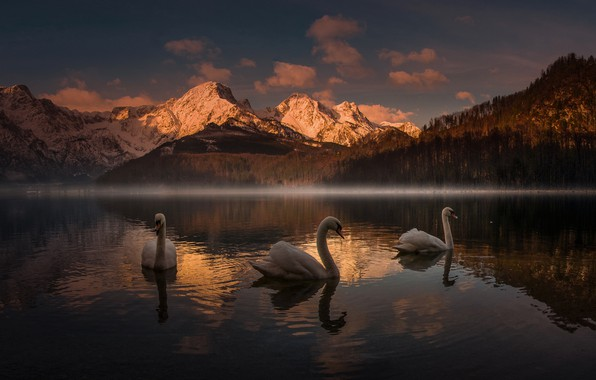 Picture sunset, mountains, lake, swans, Friedrich Beren