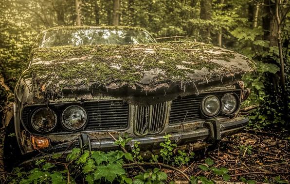 Picture machine, forest, scrap, stuff
