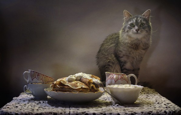 Picture cat, table, animal, kettle, Cup, still life, pancakes, napkin, sour cream, Kovaleva Svetlana, Svetlana Kovaleva