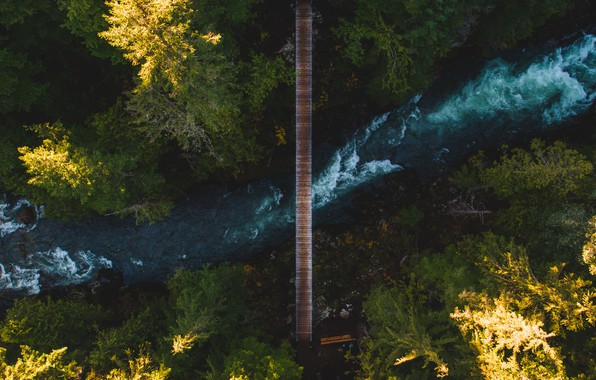Picture forest, trees, bridge, nature, river, the view from the top
