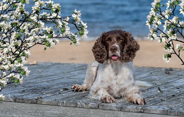 Picture sea, flowers, Spaniel