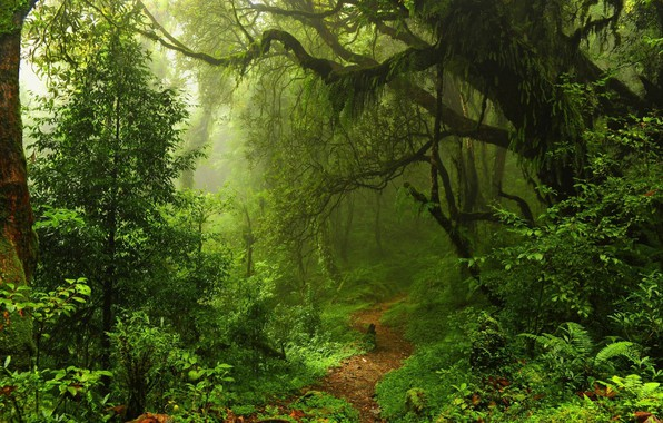 Picture USA, forest, trees, Hawaii, nature, leaves, walkway, path, mist, moss, rainforest