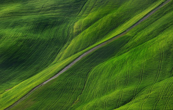 Picture road, nature, field, Spring