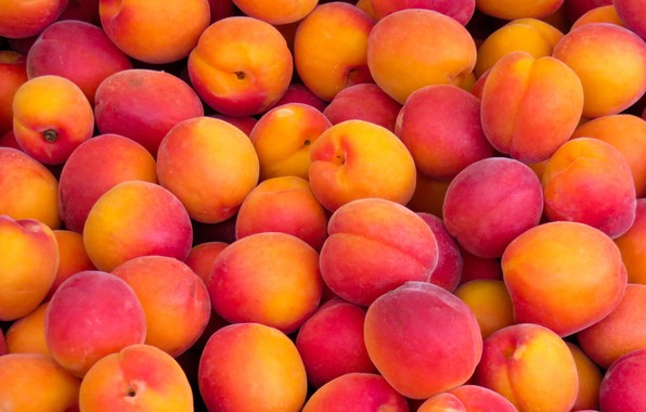 Picture fruit, a lot, apricots, ripe, ruddy