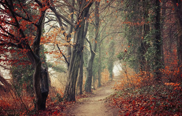Picture autumn, forest, leaves, trees, branches, fog, Park, thickets, trunks, foliage, track, red, haze, alley, falling …
