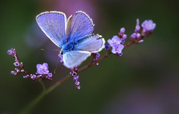 Picture macro, sprig, butterfly, flowers, bokeh
