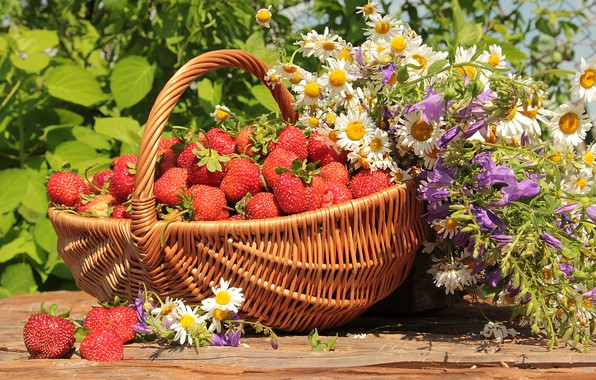 Picture greens, summer, the sun, flowers, basket, chamomile, strawberry, berry, bells