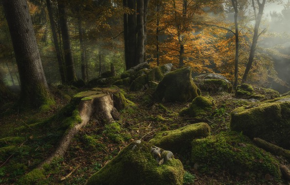 Picture autumn, forest, trees, nature, fog, stones, moss, stump, Cansiglio forest
