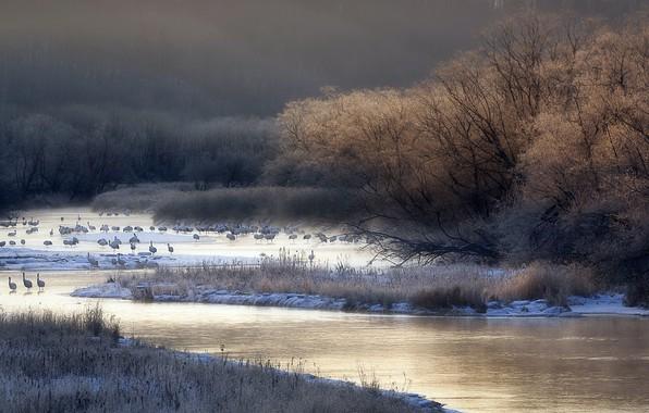 Picture birds, nature, fog, river