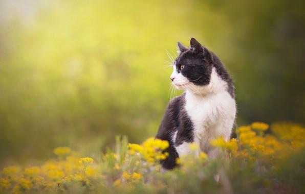 Picture cat, cat, flowers, background, profile, cat